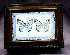 Butterfly Musical Rosewood Box  #PB2044   -----  Reg. $85.00 Now $65.00